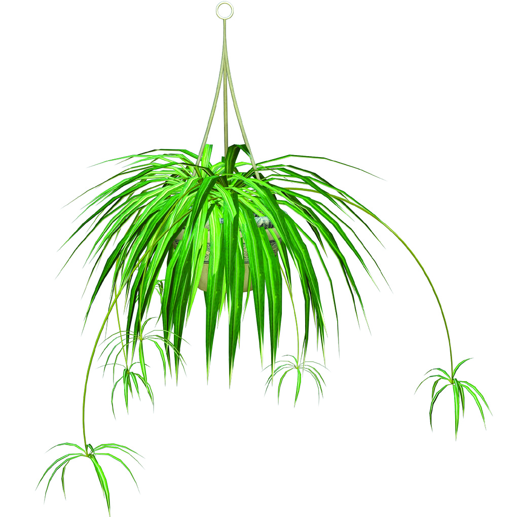 Top 5 Indoor Plants
