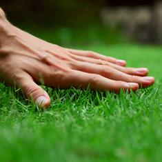 Eco-Friendly Lawn Care