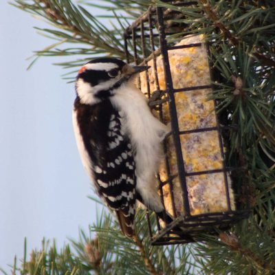 Maintaining a Bird-friendly Environment This Season