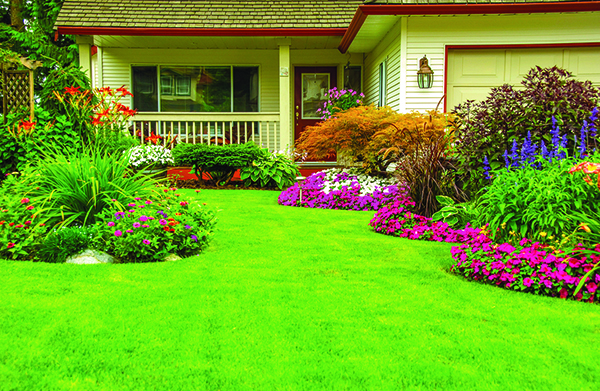 Identifying Problems That Can Threaten Lush Lawns