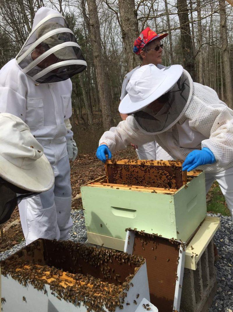 Beginner Beekeeper Basics