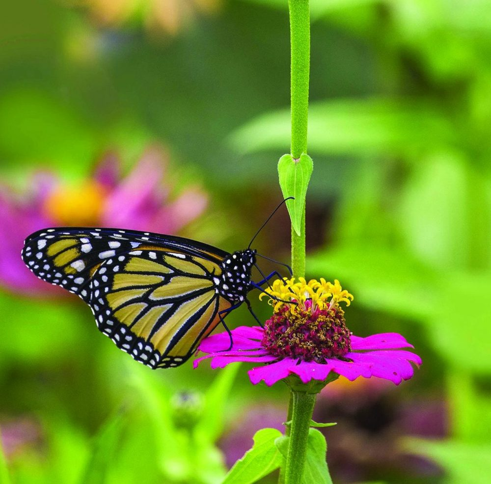 Pollinators are an Important Part of Gardens