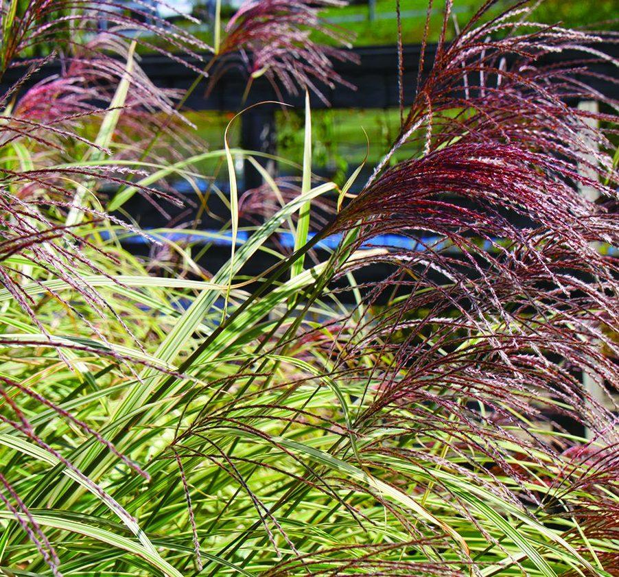Low-Maintenance Lawn Alternatives