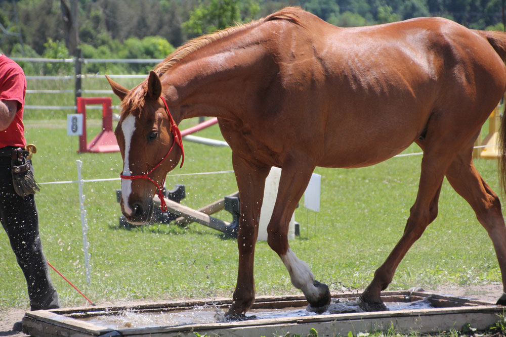 Obstacle/Desensitization Horse Play Day